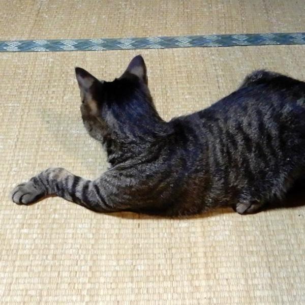猫の後ろ頭