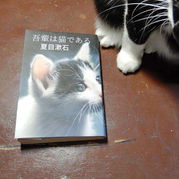 猫ブックカバー